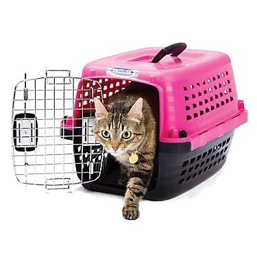 Top loader cat carrier